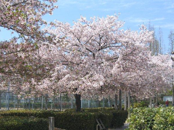 上ケ池公園(花と緑の学習園) クチコミ画像